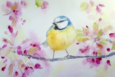 Bird and Blossom in Watercolour